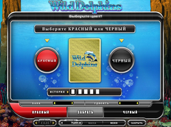 wild-dolphins-risk